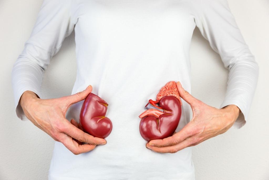 Diabetes – Schäden an den Nieren